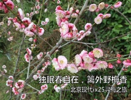 【追花者】寻梅之旅